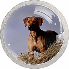 Rhodesian Ridgeback Dog   Modern Minimalist