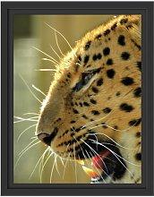 Roaring Leopard Framed Photographic Art Print East