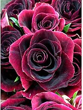SADHAF Rose Diamond Painting Cross Stitch Wall