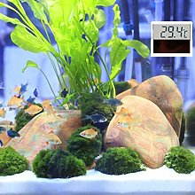 SALUTUYA Aquarium Thermometer LED Electronic