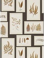 Sanderson Fern Gallery Wallpaper