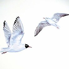 Sea Bird Wall Decals, Gull Wall Stickers, Bathroom