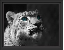Snow Leopard Eyes Framed Graphic Art Print East