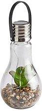 Solar Succulent Jar