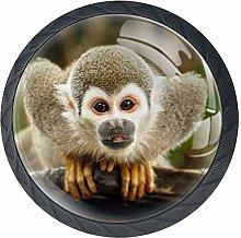 Squirrel Monkey in Ecuadorian Jungle Cabinet Door