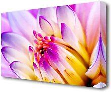 Stunning Pink Yellow Water Lily Flowers Canvas