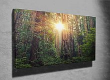 Sunny Redwood Forest Photo Canvas Print (39557084)