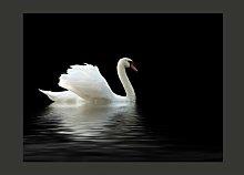 Swan Black and White 2.31m x 300cm Wallpaper East