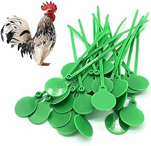 Tancyechy 100 pieces Poultry Identity Plate Tie