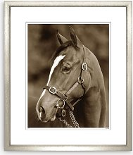 Templeton Horse Framed Print & Mount, 97 x 82cm,