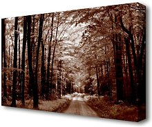 The Brown Forest Road Forest Canvas Print Wall Art
