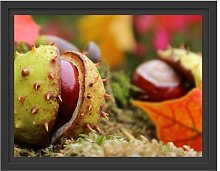 The First Chestnut Opens Framed Graphic Art Print
