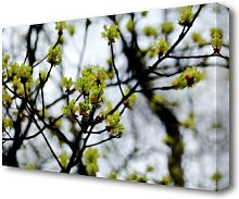 The First Signs Of Spring Flowers Canvas Print