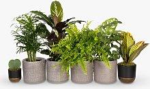 The Little Botanical Bathroom Plants