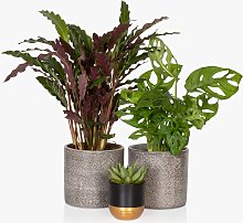 The Little Botanical Gift of Green Plants