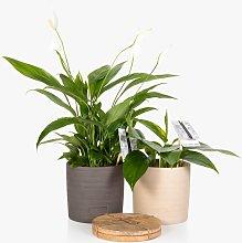 The Little Botanical Houseplant & Coaster Set