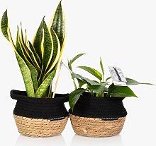 The Little Botanical Low Light Plant Basket Set