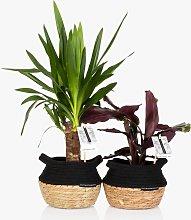 The Little Botanical Tropical Plant Basket Set
