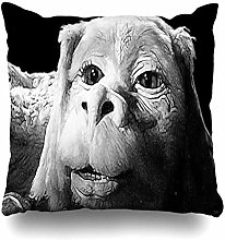 Throw Pillow Cover Square Falkor the Luck Dragon