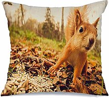 Throw Pillowcase Brown Rodent Squirrel Red Fur