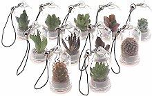 TIANTIAN 10 Pcs Mini Live Succulent Terrarium