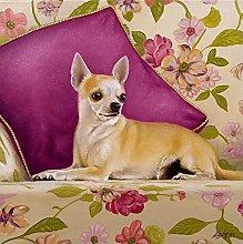 TLYMTD 5D Diamond Painting Full Kitpuppy Animal