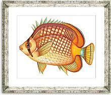 Tropical Fish 1 - Framed Print & Mount, 36 x 46cm,