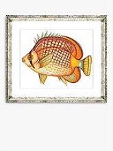 Tropical Fish 1 - Framed Print & Mount, 36 x 46cm,