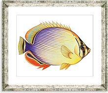 Tropical Fish 2 - Framed Print & Mount, 36 x 46cm,