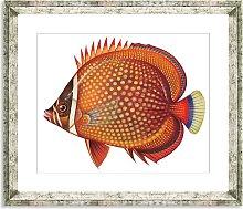 Tropical Fish 3 - Framed Print & Mount, 36 x 46cm,