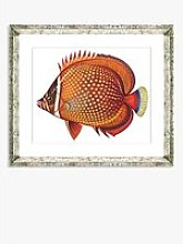 Tropical Fish 3 - Framed Print & Mount, 36 x 46cm,