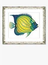 Tropical Fish 4 - Framed Print & Mount, 36 x 46cm,