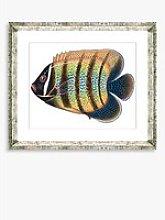 Tropical Fish 5 - Framed Print & Mount, 36 x 46cm,