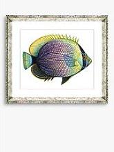 Tropical Fish 6 - Framed Print & Mount, 36 x 46cm,