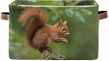 TropicalLife JNlover Forest Cute Animal Squirrel