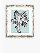 Tulip on Blue 3 - Framed Print & Mount, 46 x 36cm,
