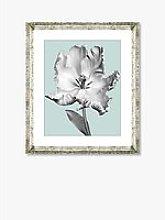 Tulip on Blue 4 - Framed Print & Mount, 46 x 36cm,