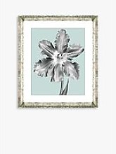 Tulip on Blue 5 - Framed Print & Mount, 46 x 36cm,