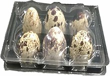 UPKOCH 50pcs Quail Eggs Cartons Small Eggs Trays