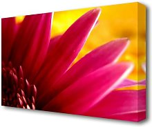 Vibrant Pink Petals On Yellow Flowers Canvas Print