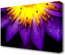 Water Lily Purple Yellow Flowers Canvas Print Wall