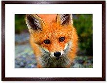 Wee Blue Coo Baby Fox Portrait Woodland Animal
