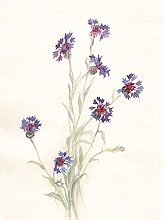 Wee Blue Coo Flower Cornflowers Watercolour Art