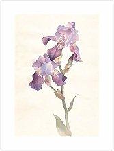 Wee Blue Coo Flower Violet Iris Watercolour Art