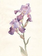 Wee Blue Coo Flower Violet Iris Watercolour Large