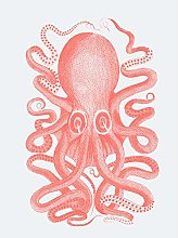 Wee Blue Coo Living Coral Octopus Large Wall Art