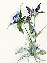 Wee Blue Coo Purple Watercolour Flowers Art Print