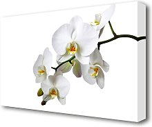 White Orchid Beauty Flowers Canvas Print Wall Art