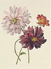 Willem Hekking Dahlias Flowers Pink And Purple Art