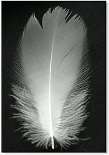 Wonderful Dream Feather Bird Silver Photographic